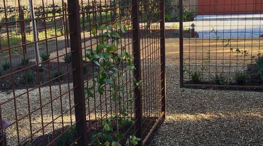 Sonoma County Trellis Fence